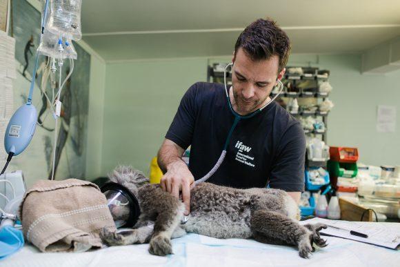 Veterinaire dienstverlening van de dierenarts